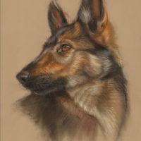 'Shepherd pup'-portrait, 25x35 cm, pastel (for sale)