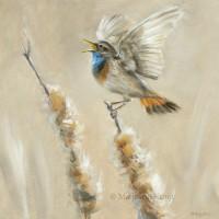 'Bluethroat', 20x20 cm, oil painting (for sale)