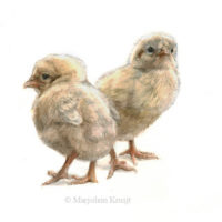 'Chicks', 15x20 cm, watercolor painting $530 incl frame
