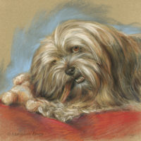'Lhasa Apso', 30x30 cm, pastel painting $950 incl frame