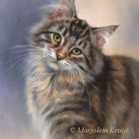 'Lilly'-Maine coon, 24x18 cm, oil (sold/commission)