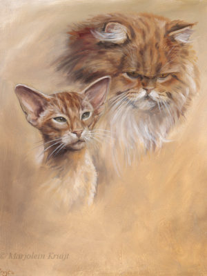 'Oriental shorthair and persian cat', 30x35 cm, oil $1,800 incl frame