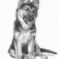 'Bayla'-shepherd puppy portrait, 24x30 cm, pencil (sold/commission)
