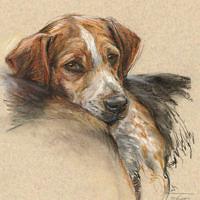 'Beagle'- pet portrait, 30x40 cm, pastel painting $980 incl frame