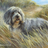 'Bearded collie' -pet portrait, 60x50 cm, oil (sold/commission)