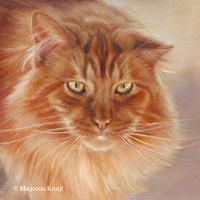 'Maine coon'- Bobbie, 30x30 cm, oil painting (sold/commission)