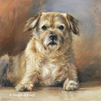 'Border terrier'- dog portrait, 30x30 cm, oil (sold/commission)