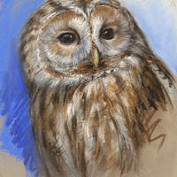 'Tawny owl', 20x27 cm, pastel painting (for sale)