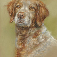 'Breto'- portrait, 20x30 cm, pastel painting (sold/commission)
