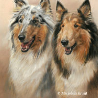 'Collies'- portrait, 50x60 cm, oil painting (sold/commission)