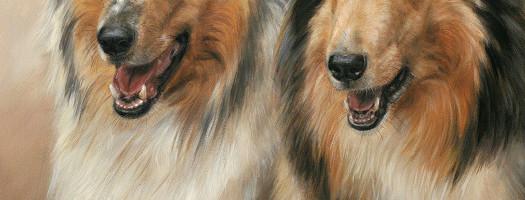 'Collies', 50x60 cm, olieverf schilderij (verkocht/opdracht)