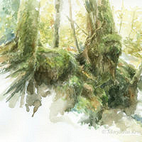 'Old trees', 35x30 cm, watercolor painting (for sale)