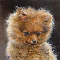'Pomeranian puppy', 13x13 cm, portrait in acrylics $600 incl frame