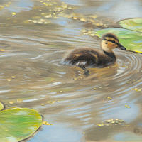'Early Spring'-Duckling, 40x20 cm, oil $2,400 incl frame at Trailside Galleries WY