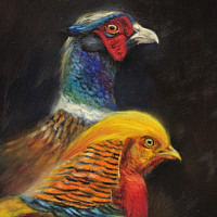 'Kin'-Com. pheasant and Golden pheasant, 15x20 cm, oil painting for sale)