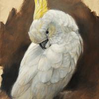 'Sulphur-crested cockatoo', 24x30 cm, oil (for sale)