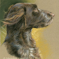 'Small Münsterländer'-Brynja, 20x30 cm, pastel (sold/commission)