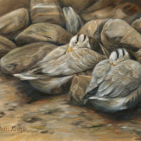'Hidden feathers'-Bar-headed geese, 60x40 cm, oil (for sale)