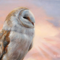 'Rays of sunset'-Barn owl, 40x25 cm, oil painting (for sale)