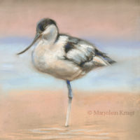 'Pied avocet', 23x28 cm, pastel painting $800 incl frame