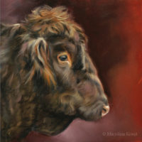 'Scot. Highland cattle', 20x20 cm, oil painting (for sale)