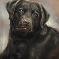 'Labrador'-Harley, 30x40 cm, oil painting (sold/commission)