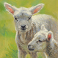 'Lambs', 20x26 cm, oil painting $1,200 incl frame