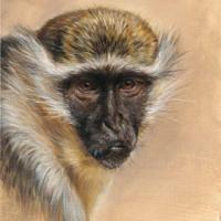 'Vervet monkey', 30x40 cm, oil painting (NFS)