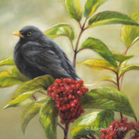 'Common blackbird', 20x20 cm, oil painting (sold)
