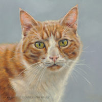 'Pax'-cat portrait, 20x20 cm, oil painting (sold/commission)