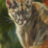 'Puma', 15x20 cm, oil painting (for sale)