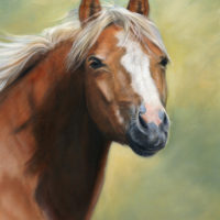 'Pony'-portrait, 30x40 cm, oil painting (sold/commission)