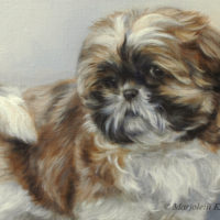 'Shih Tzu puppy', 30x30 cm, oil painting (sold/commission)