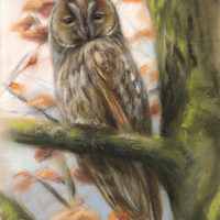 'Long-eared owl', 25x38 cm, pastel painting (for sale)