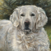 'Golden retriever', 60x50 cm, oil painting (sold/commission)