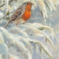 'Robin in the snow', 15x20 cm, oil painting (sold)