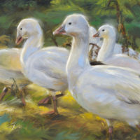 'Snow geese', 15x20 cm, oil painting (for sale)