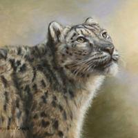 'Snowleopard', 60x40 cm, oil painting (NFS)