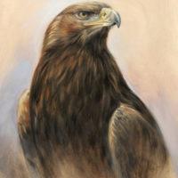 'Golden Eagle study', 30x40 cm, oil painting (for sale)