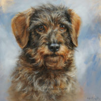 'Wire-haired dachshund'- portrait, 20x20 cm, oil painting (sold/commission)