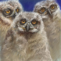 'Owlets', 24x27 cm, pastel painting (for sale)