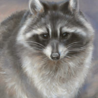 'Raccoon', 24x18cm, oil painting (sold)