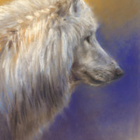 'White wolf'-study, 20x30 cm, pastel painting (for sale)