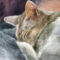 'Yoda'-siamese cat, 19x13 cm, watercolor painting (NFS)