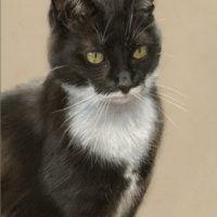 'Black cat', 20x30 cm, pastel painting (sold/commission)