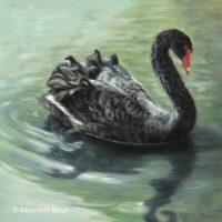 'Gracious'-Black swan, 40x40 cm, oil painting (for sale)