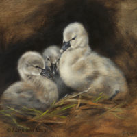 'Black cygnets', 20x20 cm, oil painting $1,400 incl. frame at Trailside galleries WY