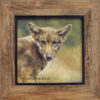 'Young wolf', 20x20 cm, oil painting (for sale)