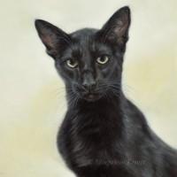 'Siamese'- cat portrait, 30x30 cm, oil painting (sold/commission)