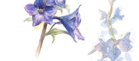 how to paint Delphinium flowers in watercolour by Marjolein Kruijt